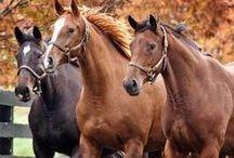 HORSES / koní