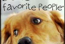 Perros / Cachorros y Perros