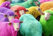 Let's Do Colours