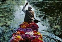 My Heritage / by Sarah Kashmiri