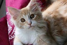 ~The Kitties~