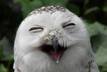 LOVE Owls / by Amy Jensen
