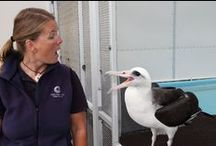 Cool Ocean Jobs / Caring for penguins, hand-feeding fish and providing routine veterinary exams to green sea turtles is all in a day's work for staff members at the Monterey Bay Aquarium!