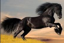 HORSES ♥  / by Ann Arruda