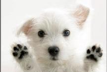 DOGS & PUPPIES ♥  / by Ann Arruda