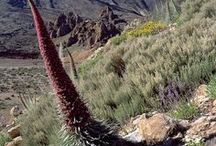 Flora and Fauna in Tenerife / Stunning images and info about the fauna and flora in Tenerife. For more visit: https://www.tenerifetravelsecrets.com