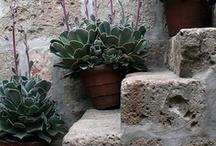 urban g a r d e n i n g  / urban gardening