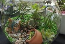 Terrarium and Succulents