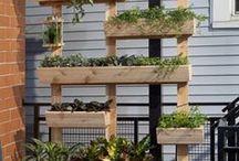 DIY - Garden/Balcony / by Maria Z