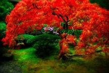 Japanese Garden / by Bonna Mettie