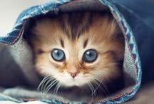 ♥ Cute ♥ / by Lydias Treasures - Lisa