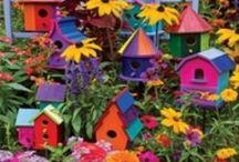 Jardinade / Tout ce que j'aime dans mon jardin !!! / by Christine Bureau