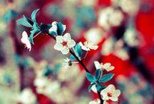 Blossom / How do you blossom?