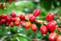Coffee Around The World / Coffee, Cafe, Kopi, Kaffi, Kava...you get it!