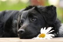 Live, Love, Bark! / by Christa Gardner