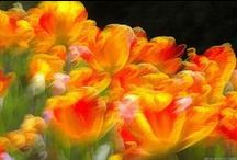 Nature & Flowers Photography / Inspiring photographs of nature and flowers