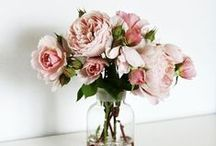 flora / Flowers, flowers and more flowers. Anything floral, beautiful bouquets & arrangements.