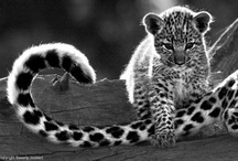 The Animal Kingdom / #animal  / by Josefin Pettersson