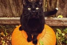 All Hallow's Eve- Halloween