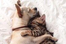 Best Friends / by Andreja B.