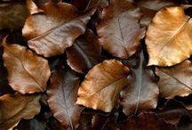 Dark Chocolate BROWN / ... / by Carol Christ