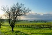 Featured Wineries at The California Wine Club / Go on the hunt for small-family wineries. Here you'll find the wineries we've featured throughout California Wine Country, from Sonoma and Napa wineries to Temecula and Santa Barbara.