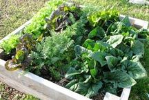 Edible Gardens / by Halleck Horticultural