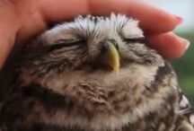 Owls / by Mandy Bridges