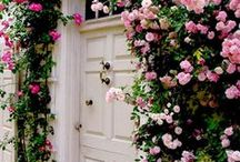 { Flower Arrangements }