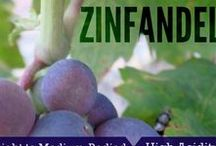 California Zinfandel /  Zinfandel is a medium to full-bodied red wine with berry or spicy, peppery flavors. Great with pizza and tangy barbecue sauce.