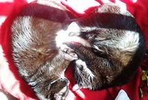 Cat-ocracy ;)