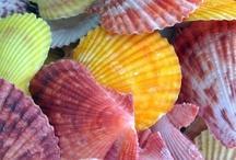 shells! / by Gabi Hecker de Geus