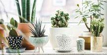 succulent & cactus ♥