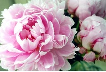 Fantastic Florals! / Florals and beautiful things for the home.