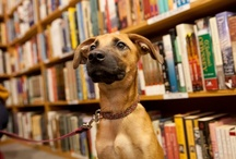 """outside of a dog... / """"Outside of a dog, a book is probably man's best friend; Inside of a dog, it's too dark to read."""" ~ Groucho Marx"""