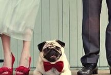 "Dogs In Weddings & Pug Love / We are Pug lovers at The Left Bank Jewelry & Bridal Finery. We have 2 rescue pugs, Phoebe & Penelope and 1 rescue ""Chug"" named Gracie. We support animal rescue and adoption and love to see your furry family photograohed on your wedding day!"