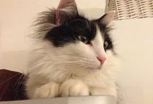 ENEA: my little, sweet, black and white cat / It is 3 years old. It's an important part of my life. It loves play with little colored balls.It likes sunny days and blue sky.