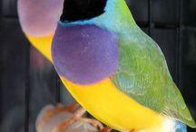 Color & Love