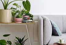 Botanic / Go bloom