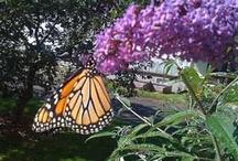 Butterfly Gardens ~ / by Sheila Ball