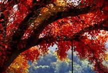 Autumn / by Dawn