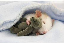 animals are cute / by Olivia Woolard