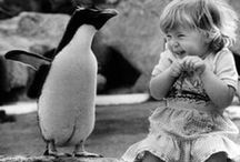 Penguins...how I love thee.