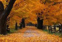 Autumn Heaven