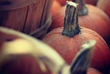 The Great Pumpkin / All things pumpkin.