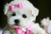 My Spoiled Puppy / by Renee Biernbaum