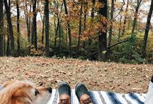 Girl's Best Friend / Camping with dogs.