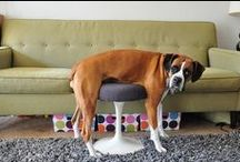 Pet-Approved Knoll / There's no rule saying dogs can't enjoy design, too! Here's to our pets that love good design as much as we do.