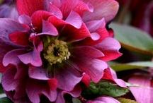 FLOWERS / by ARLENE STONE |