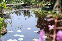 Jardin Botanique - Saverne